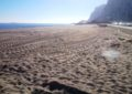 Este jueves ha terminado la retirada de restos vegetales de las playas urbanas