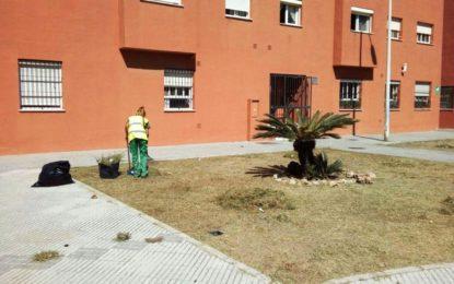 Trabajos de mantenimiento en jardinería y limpieza de solares en varios puntos de la ciudad