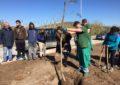 Colegiales linenses participan en el Día del árbol con una plantación de 25 árboles en la zona de Nueva Línea
