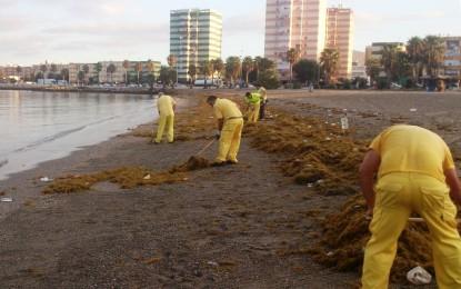 Tareas de limpieza en la playa de Poniente ante la masiva llegada de broza