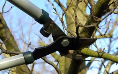 Mañana, plantación colectiva en el parque por la pasada conmemoración del día del árbol