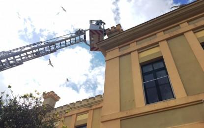 Retirados dos nidos de gaviotas del complejo educativo Ballesteros y del Conservatorio