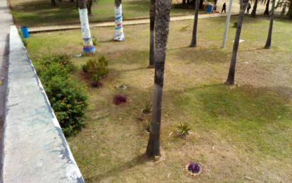 """La reforestación del parque Princesa Sofía creará """"La plaza del amor"""""""