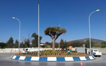 Más de mil plantas decoran la rotonda del drago, junto al Nuevo Hospital