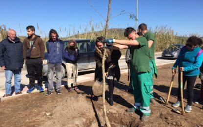 """Con motivo del """"Día Mundial del Árbol"""" se plantarán 28 nuevos árboles en el Paseo de La Velada recuperando los sistemas de riego"""