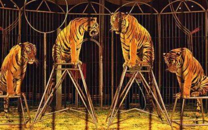 El Gobierno de Gibraltar prohibe el uso de animales en los circos