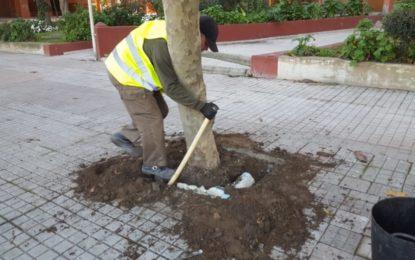 Parques y Jardines acomete el relleno de alcorques para eliminar barreras arquitectónicas y mejorar la salud de los árboles
