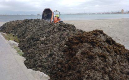 Playas retira 489.000 kilos de algas del litoral de Poniente a consecuencia de los últimos temporales