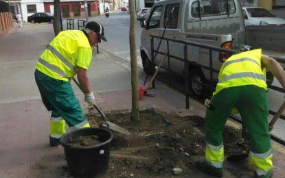 Medio Ambiente planta distintas especies de árboles en varias zonas de la ciudad