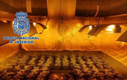 La Policía Nacional desmantela  en La Línea de la Concepción una plantación con más de 200 plantas de marihuana