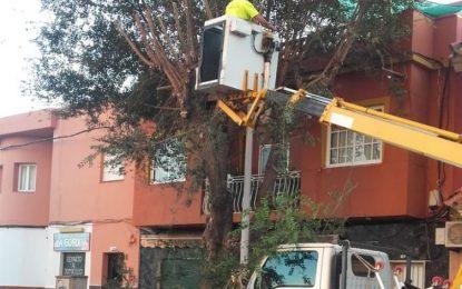 Acometidos trabajos de poda de grandes árboles en la calle Pedreras para evitar problemas con las nuevas luminarias