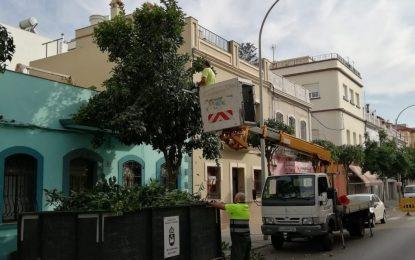 Parques y Jardines desarrolla una campaña de poda por distintas calles de la ciudad