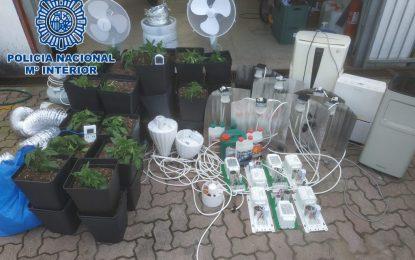 La Policía Nacional desmantela  una plantación  indoor con  80 plantas  de cannabis sativa ubicada  en la Barriada Sagrado Corazón