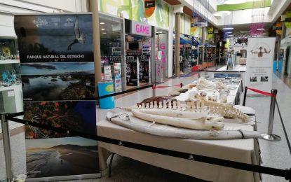 La exposición sobre el Parque Natural del Estrecho se traslada a Tarifa