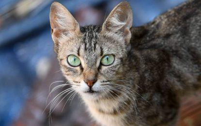 La delegación de Salud  prevé incluir alrededor de 250 gatos en la implantación del método CES