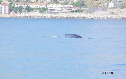 El Departamento de Medio Ambiente continúa protegiendo la fauna marina en Gibraltar