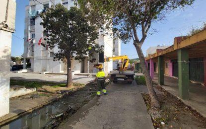 Infraestructuras y Parques y Jardines realizan trabajos para evitar distintos problemas con el mobiliario urbano en la calle Virgen de la Luz