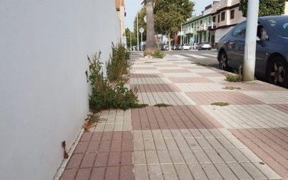 El PSOE de La Línea exige a Juan Franco que limpie la ciudad de «hierbas y rastrojos»