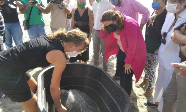 La consejera de Desarrollo Sostenible suelta en La Línea dos tortugas boba recuperadas en el CEGMA del Estrecho