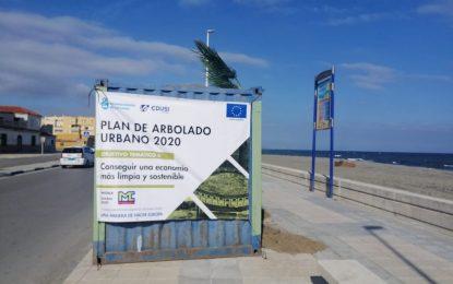 Las obras del Plan de Arbolado Urbano se paralizan  por problemas sanitarios entre los operarios de la empresa concesionaria derivados del Covid-19