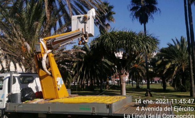 El Ayuntamiento contrata una empresa especializada para el seguimiento de la salud de los dragos del parque
