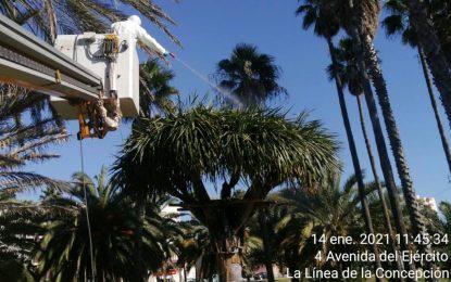 El Ayuntamiento somete a todos los dragos del parque  a  un tratamiento preventivo fitosanitario