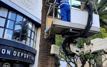 Mantenimiento Urbano realiza trabajos de retirada del cableado aéreo en la Plaza Fariñas