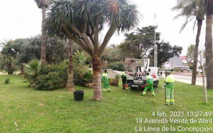 Parques y Jardines retira las sujeciones artificiales de dos dragos en el parque Princesa Sofía