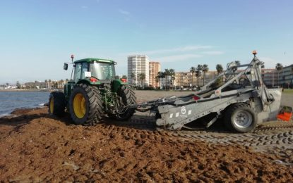 Playas ha retirado más de 30.000 kilos de algas del litoral de Poniente