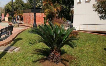 Parques y Jardines recibe una nueva donación particular de seis ejemplares de Cyta Revoluta
