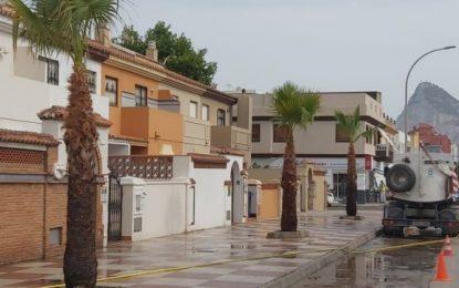 Parques y Jardines da por finalizado el Plan de Arbolado 2020/21 con la siembra de 10 palmeras en la avenida María Guerrero