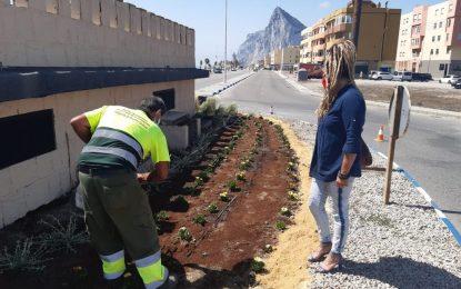Parques y Jardines intensifica los trabajos en el paseo de Levante con limpieza de palmeras quemadas y replantación con riego en rotondas
