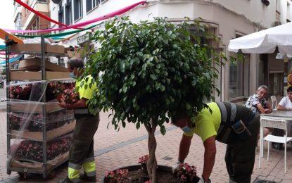 Parques y Jardines planta 800 especies florales y  arbustales En la última semana se han podado las palmeras de Poniente y se han realizado tareas de siega y desbroce en el parque Princesa Sofía