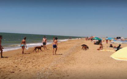 Otra Línea es posible afirma que Juan Franco niega a los linenses la opción de contar con una playa canina