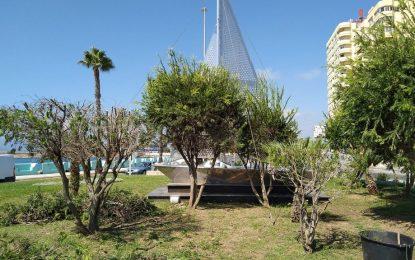 Parques y Jardines acomete la poda de palmeras y la siembra de nuevas plantas en plaza Fariñas