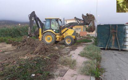 Parques y Jardines realiza trabajos de mantenimiento, poda y siembras por toda la ciudad